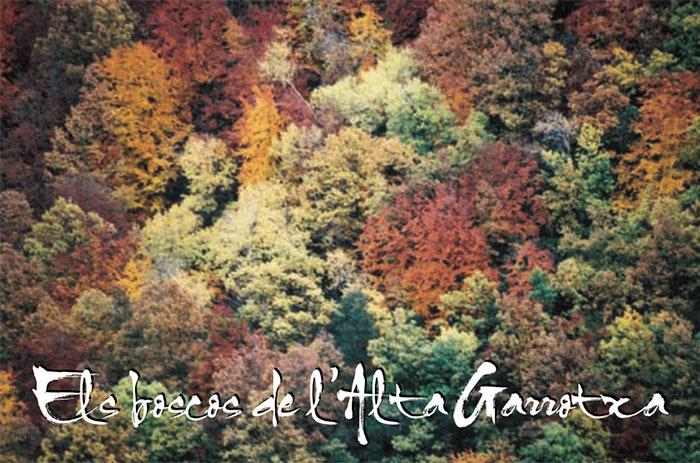 Els boscos de l'Alta Garrotxa