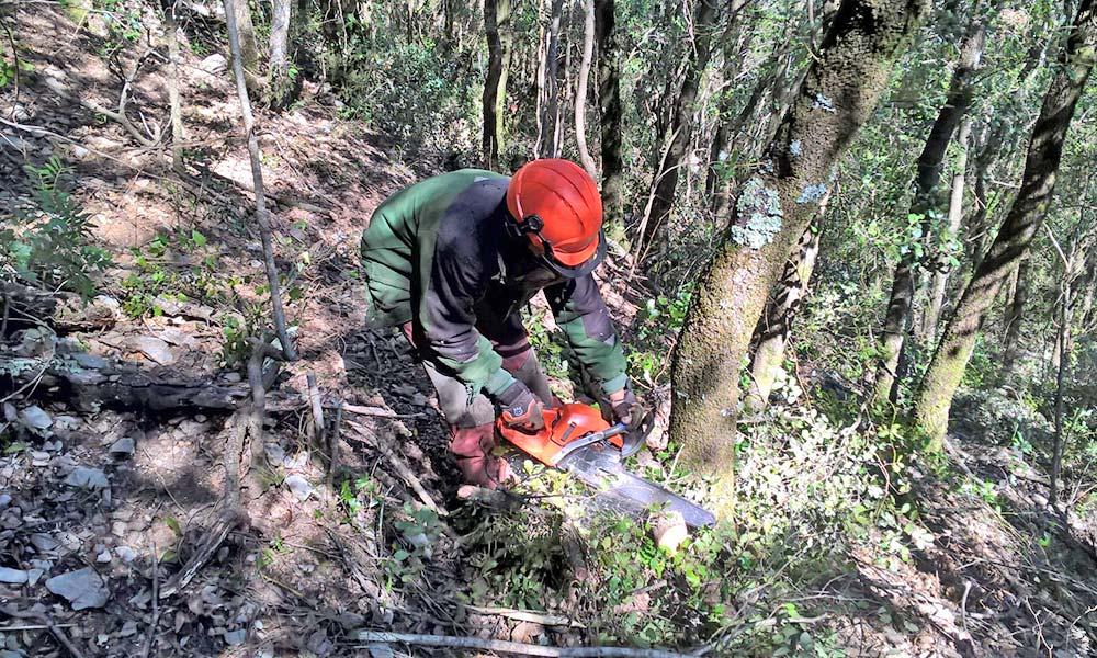 Millora d'habitats forestals de l'Alta Garrotxa